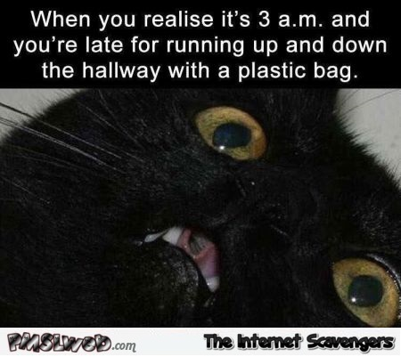 When you're late for running up and down the hallway funny cat meme @PMSLweb.com