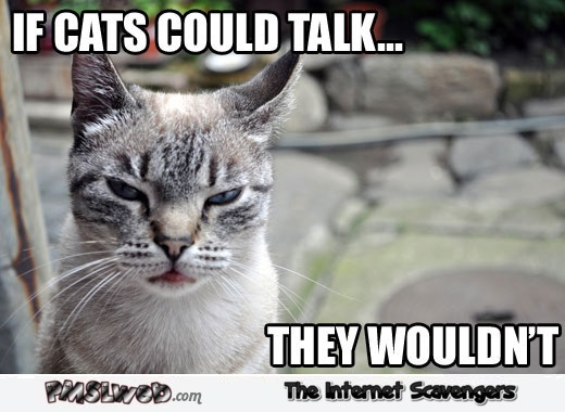 If cats could talk they wouldn't funny meme - Hilarious cat memes and pics @PMSLweb.com