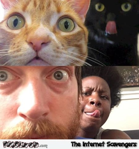 Man and woman imitating their cats humor - Hilarious cat memes and pics @PMSLweb.com