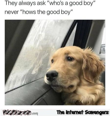They never ask how's the good boy funny dog meme @PMSLweb.com