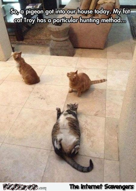 Fat cat has a particular hunting method funny meme - Hilarious cat memes and pics @PMSLweb.com