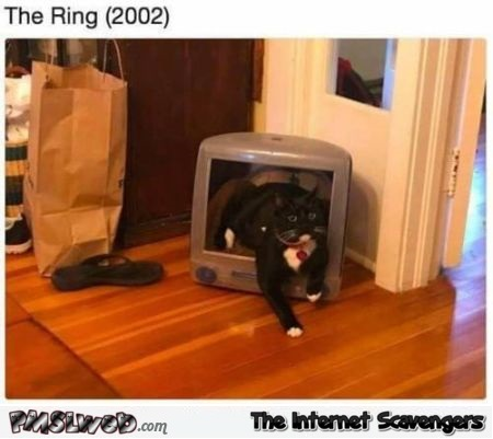 The ring cat edition funny meme @PMSLweb.com