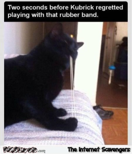 Cat was about to regret playing with the rubber band funny meme @PMSLweb.com