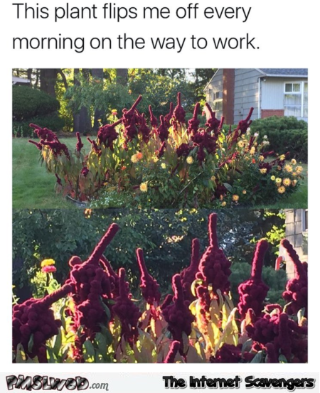 This plant flips me off every morning funny meme @PMSLweb.com