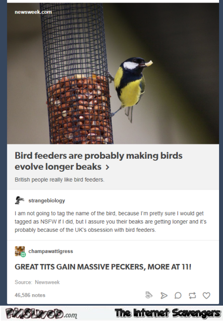 Great tits gain massive peckers funny comment @PMSLweb.com