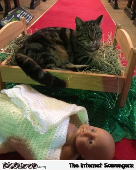 Cat doesn't care about baby Jesus funny Christmas picture @PMSLweb.com