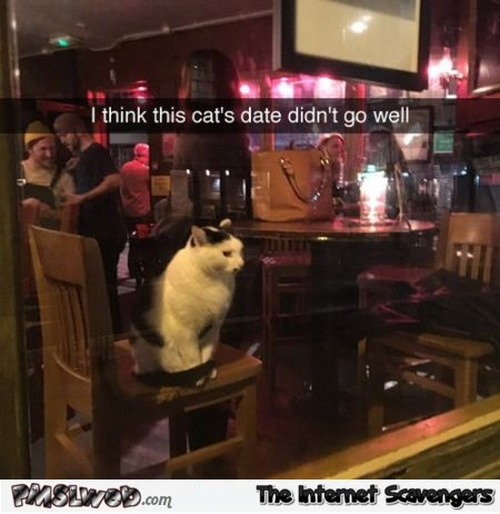 I think this cat's date didn't go well funny meme - Amusing Internet pics @PMSLweb.com