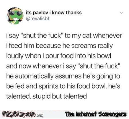 I say shut the fuck up to my cat funny post