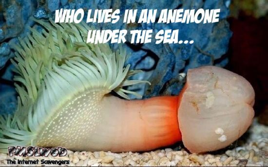 Who lives in an anemone under the sea adult meme @PMSLweb.com