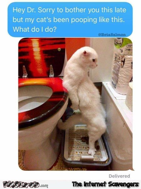 Cat poops in a weird way funny text message - Funny Friday picture collection @PMSLweb.com