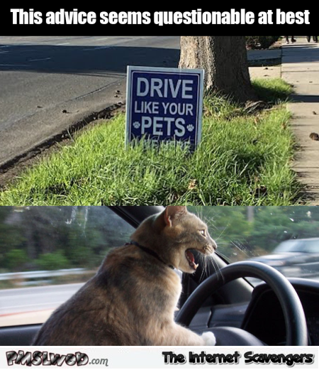 Drive like your pets funny meme @PMSLweb.com
