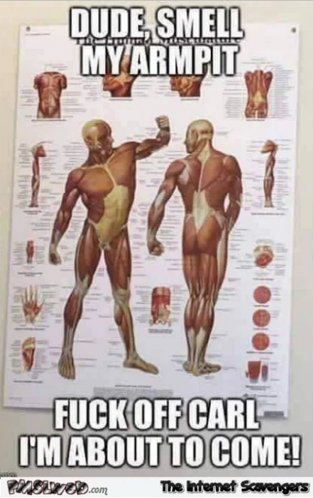 Funny anatomy poster meme