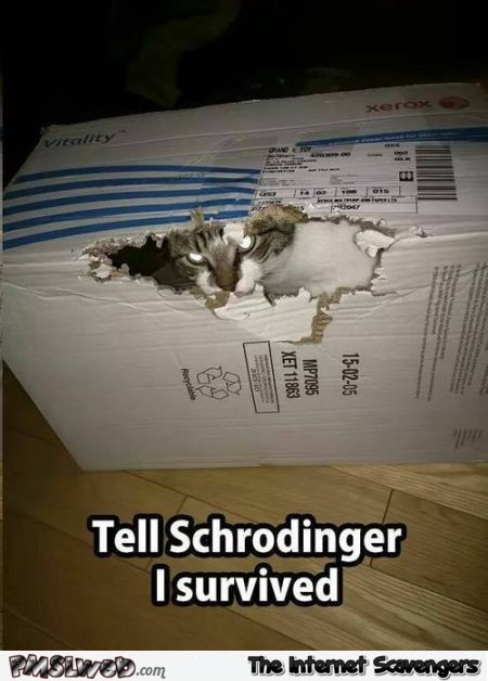 Tell Schrodinger I survived funny cat meme - Funny Internet BS @PMSLweb.com