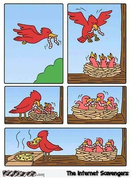 Pizza eating bird is an asshole funny comic