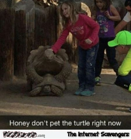 Don't pet the turtle right now funny meme @PMSLweb.com