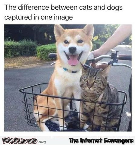 This sums up the difference between cats and dogs funny meme @PMSLweb.com