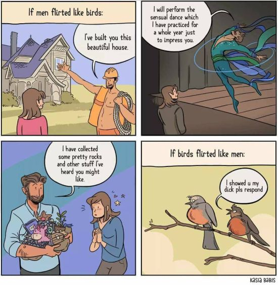 If men flirted like birds funny comic - Daily funny pictures @PMSLweb.com