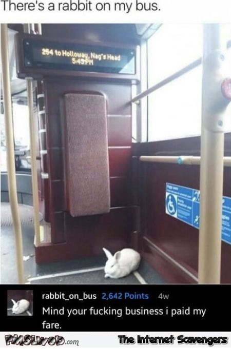 There's a rabbit on my bus funny comment