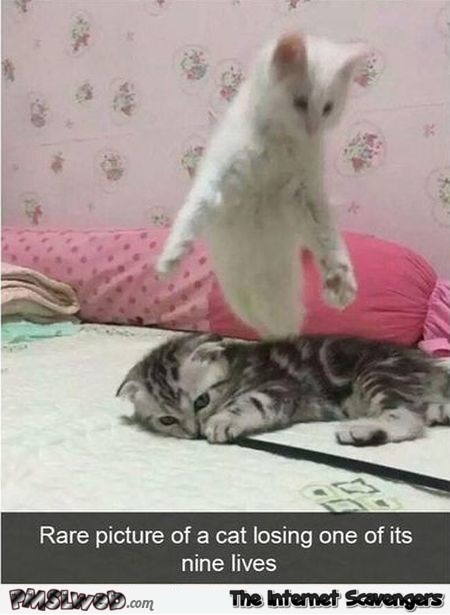 Rare picture of a cat losing one of its nine lives funny meme @PMSLweb.com