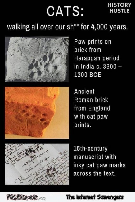 Cats have been walking all over our shit for 4000 years humor