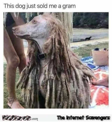 This dog just sold me a gram funny meme